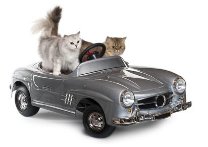 top fait amusant chats 14