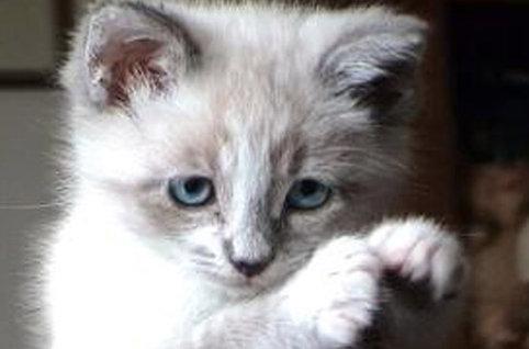 20 faits amusants sur les chats allergies m moire court terme maladies identiques. Black Bedroom Furniture Sets. Home Design Ideas