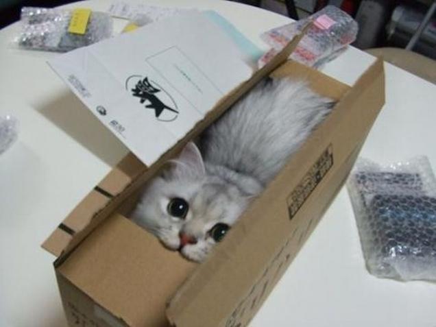 Célèbre Découvrez pourquoi les chats aiment se cacher dans des boîtes et  KW76