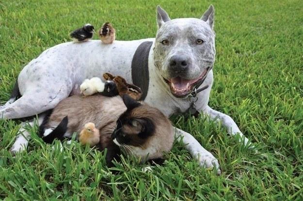 sauvetage chiens méchants