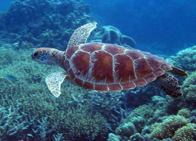 nemo barriere de corail 2