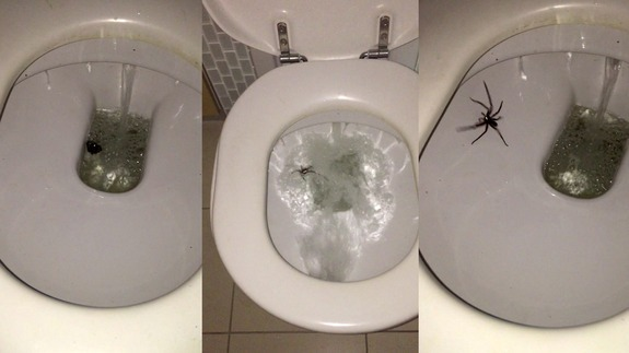 En australie m me craser une araign e c 39 est dangereux - Signification araignee dans une maison ...