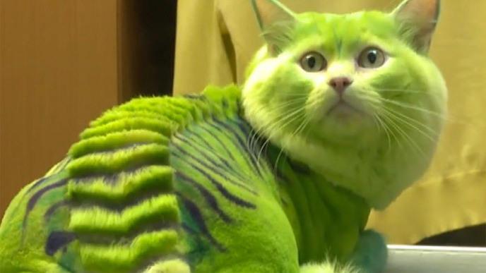 http://static.hitek.fr/img/actualite/2015/06/w_cat-si.jpg