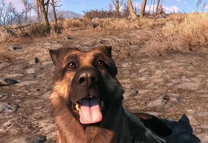 chien 4
