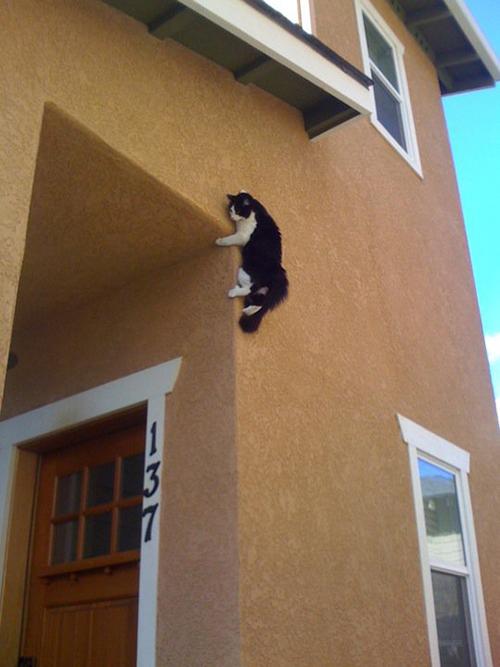 raisons chat dominera le monde