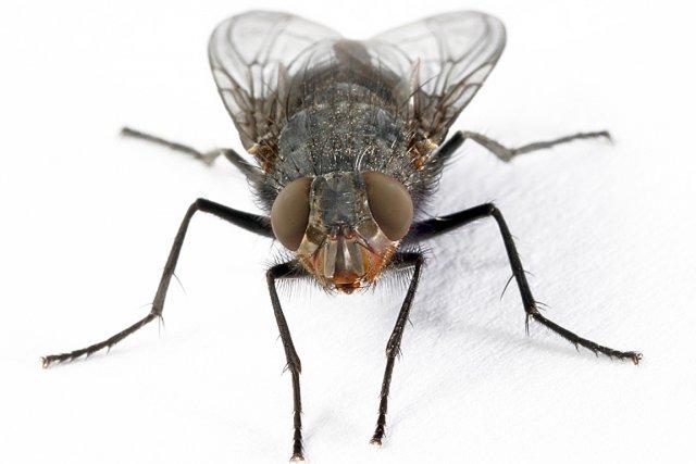 V tements froiss s doigts frip s paquet de chips moiti vide ces choses du quotidien - Comment tuer une mouche ...