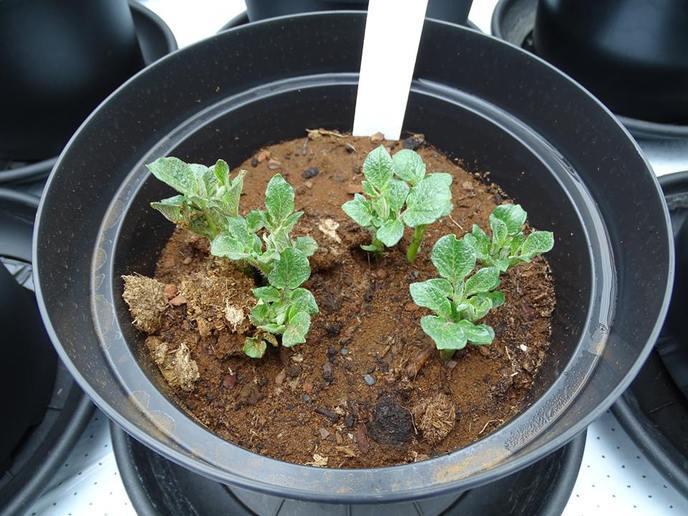legumes-mars-sans-danger-pour-lhomme