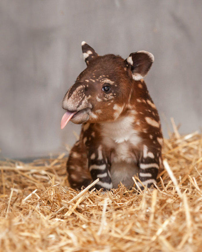Souvent Des bébés animaux rares que vous n'avez certainement jamais vu SC87