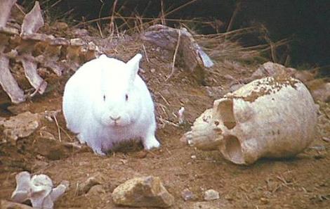 Killer Rabbit Holy Grail