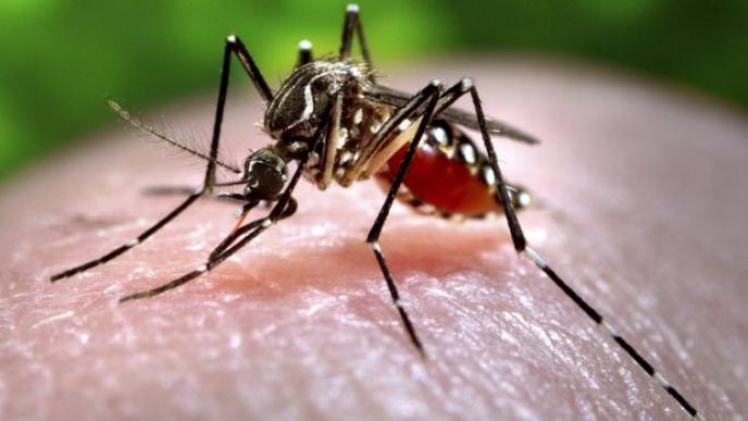 Verily, appartenant à Alphabet, relâche 20 millions de moustiques pour combattre Zika