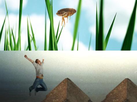 puce saut pyramide