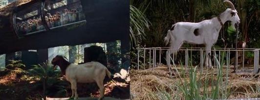 chèvre T-Rex