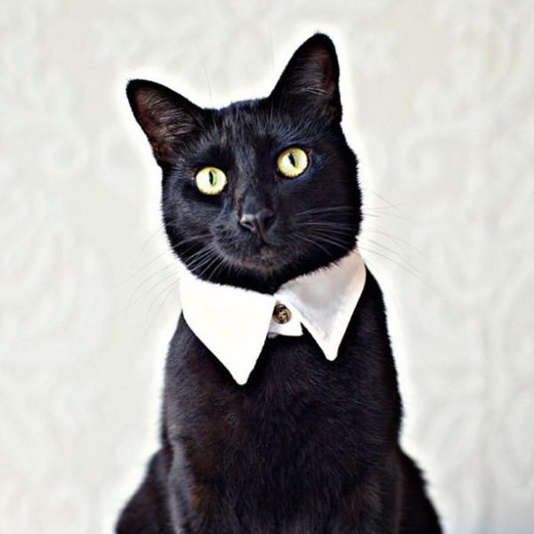 les meilleurs chat Compiègne