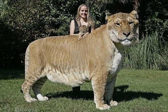 animal géant