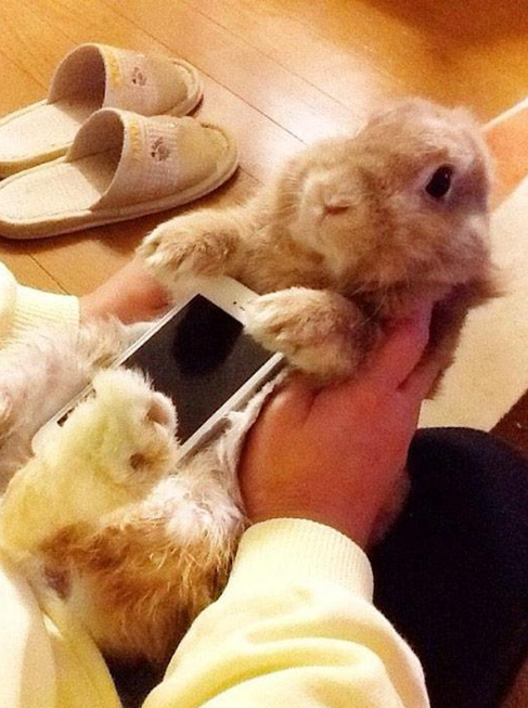 bunnycase