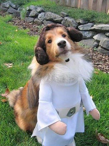 Animaux en costume Star Wars