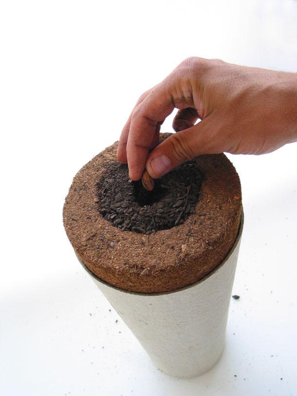 bios-urn-urne-funeraire-arbre