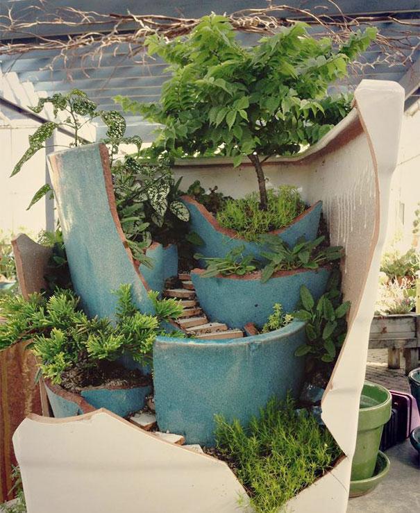 pot - Jardin Japonais Miniature Cactus