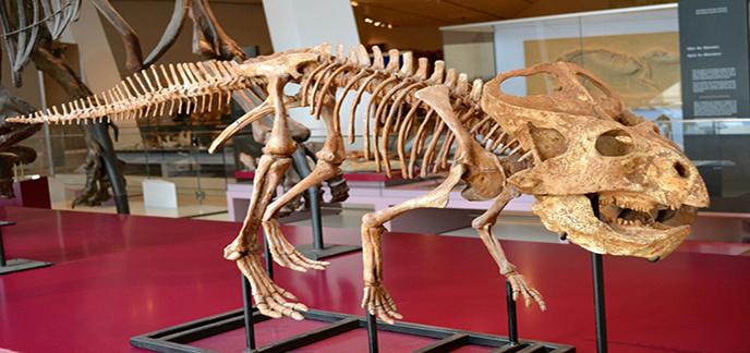 gryphoceratops-by-cjarmk.jpg