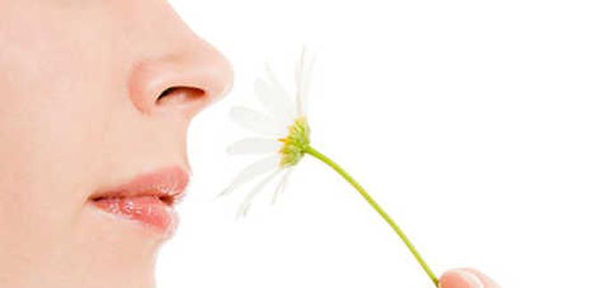 le nez humain est capable de distinguer 1 000 milliards d 39 odeurs. Black Bedroom Furniture Sets. Home Design Ideas