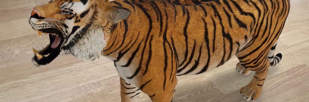 google-faites-apparaitre-chez-vous-des-animaux-en-realite-augmentee
