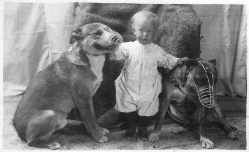 pitbull nanny dog