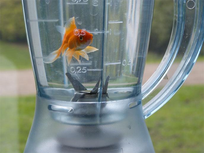 Avaler un poisson rouge vivant une neknomination qui lui for Nourriture pour poisson rouge