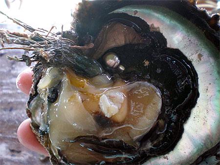 Comment les huitres produisent elles des perles for Interieur huitre