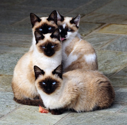 top-chat-journee-internationale