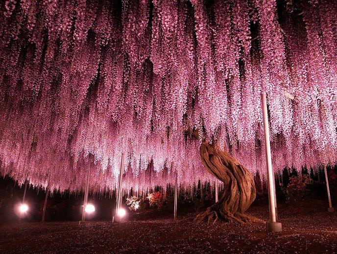 Les 14 arbres les plus incroyables de la Terre W_amazing-trees-1-1