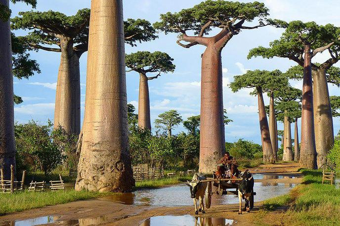Les 14 arbres les plus incroyables de la Terre W_amazing-trees-11