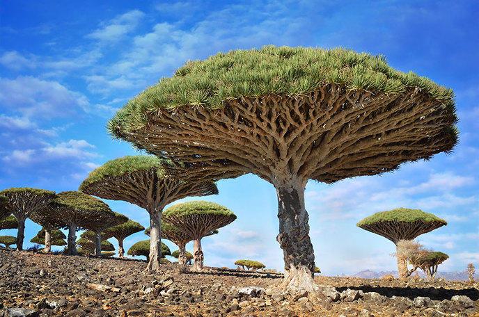 Les 14 arbres les plus incroyables de la Terre W_amazing-trees-14