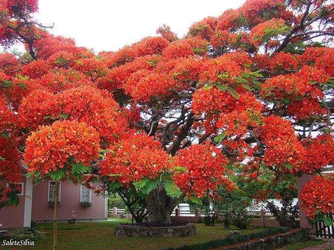 Les 14 arbres les plus incroyables de la Terre W_amazing-trees-15