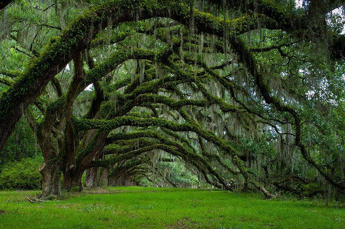 Les 14 arbres les plus incroyables de la Terre W_amazing-trees-17-1