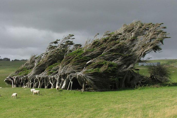 Les 14 arbres les plus incroyables de la Terre W_amazing-trees-18