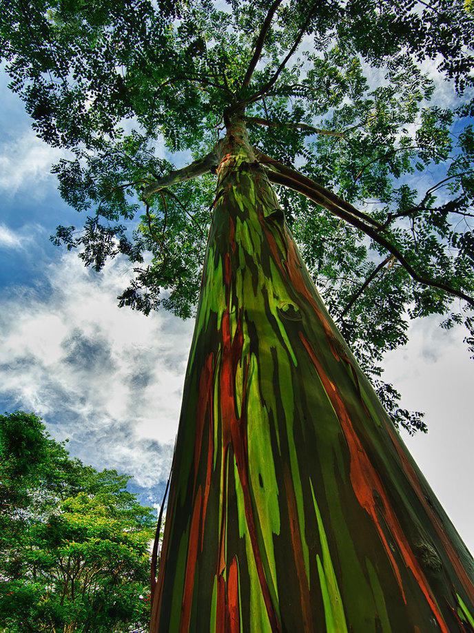 Les 14 arbres les plus incroyables de la Terre W_amazing-trees-19-1