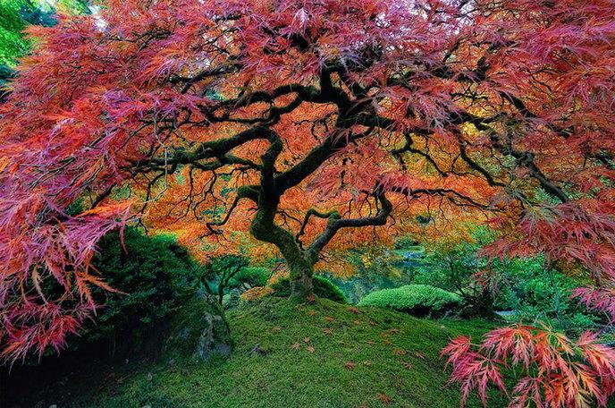Les 14 arbres les plus incroyables de la Terre W_amazing-trees-21