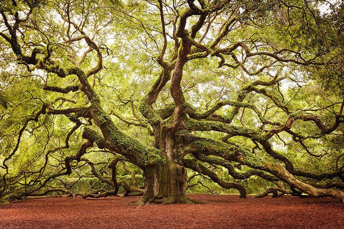 Les 14 arbres les plus incroyables de la Terre W_amazing-trees-22