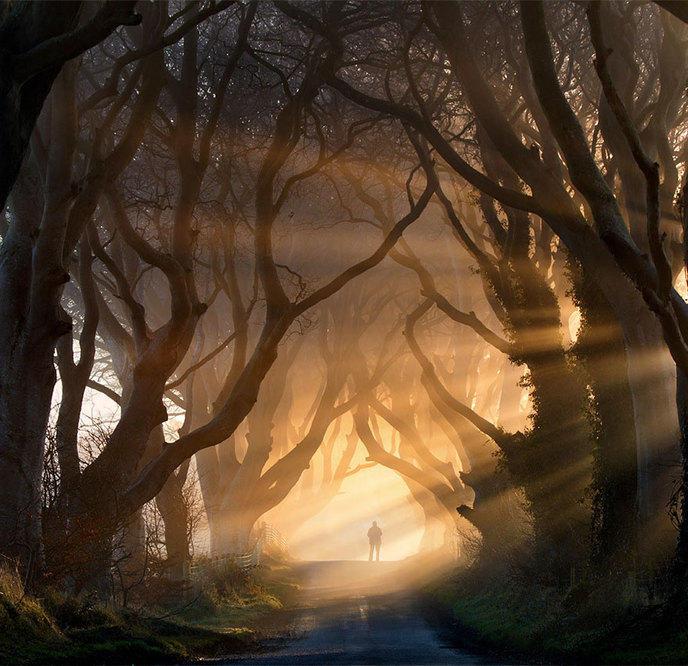 Les 14 arbres les plus incroyables de la Terre W_amazing-trees-6-1