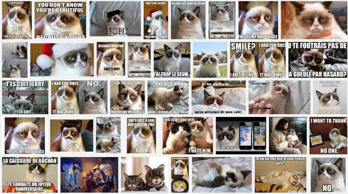 Grumpy Cat Google
