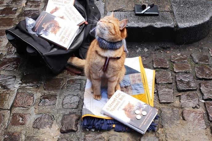 Topic des chats - Page 34 W_street-cat-bob