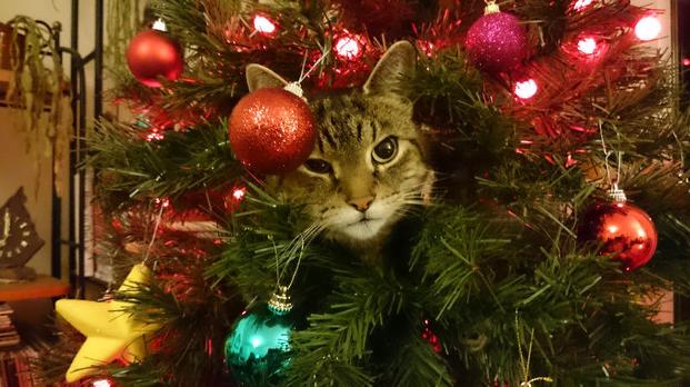 Résultat d'images pour Belles photos chat arbre de Noël